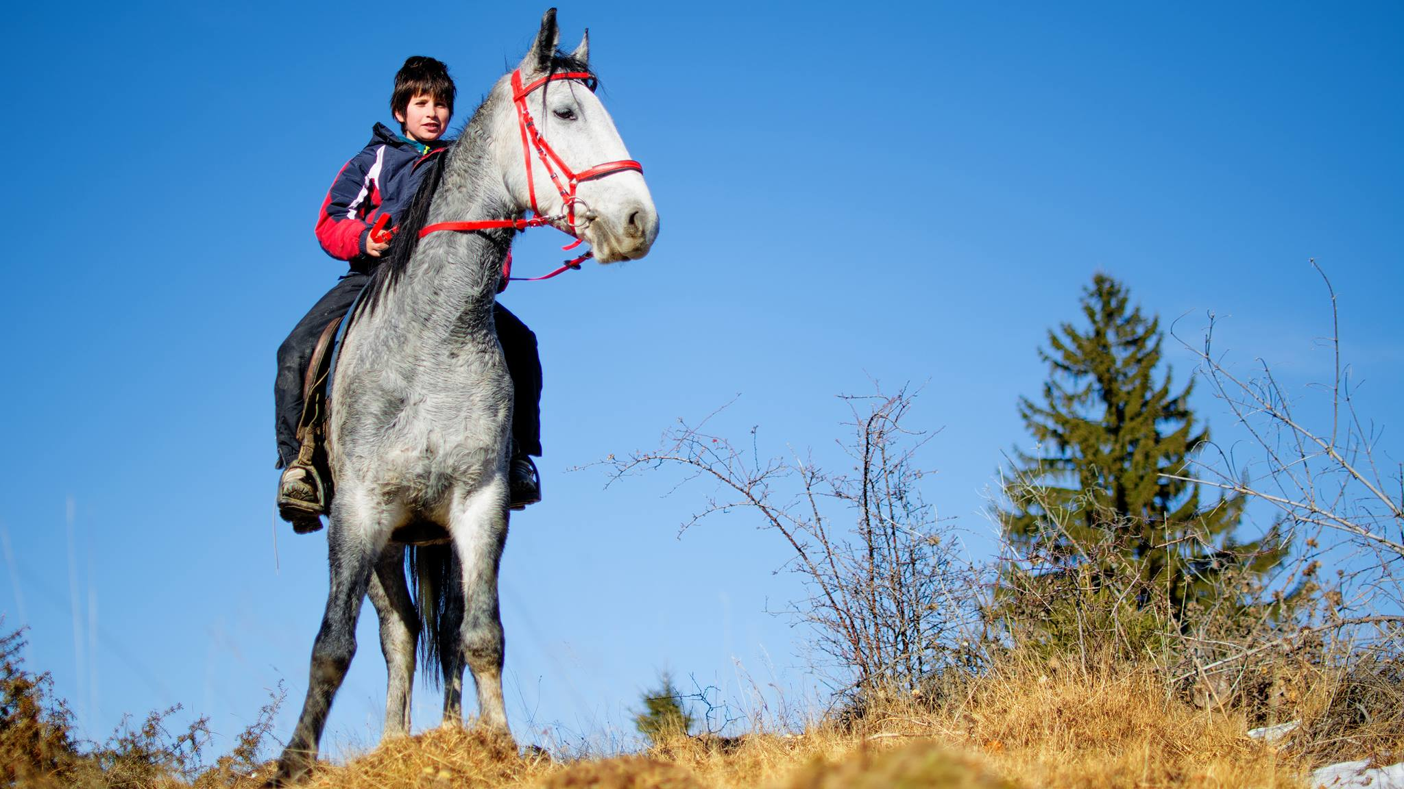 Copil pe cal